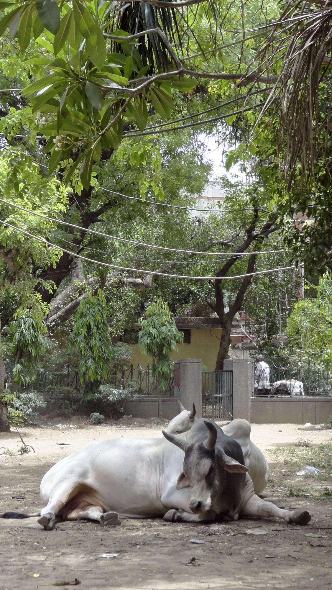 Inde-1