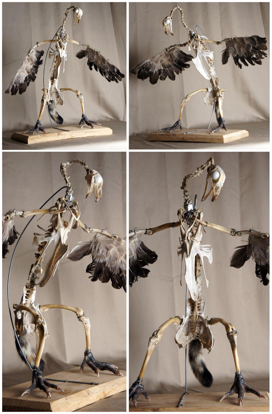 HETA-poule-vautour