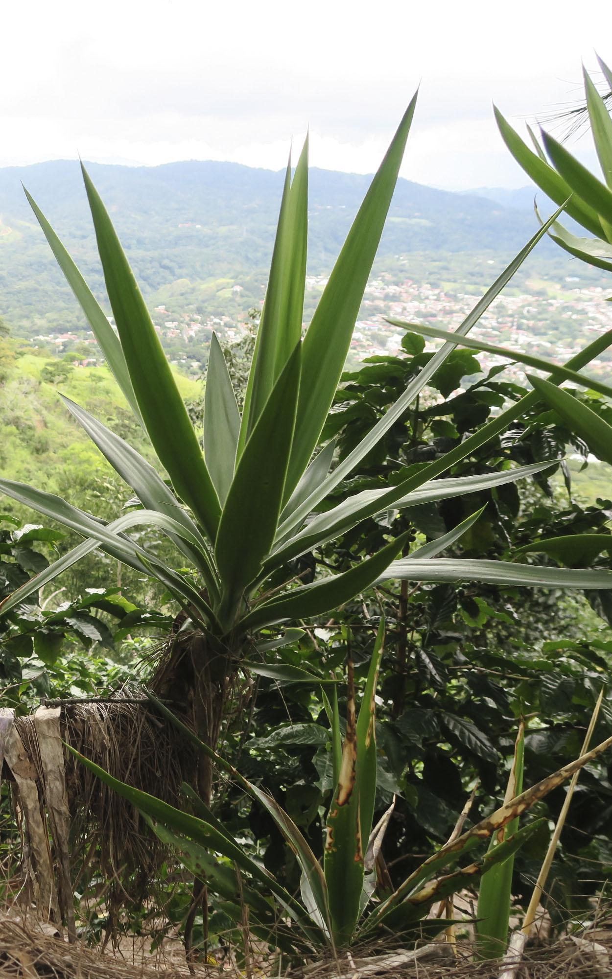 Costa-Rica-6