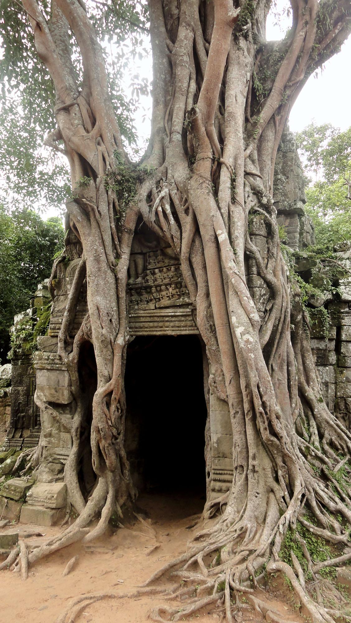 Cambodge-vert-1