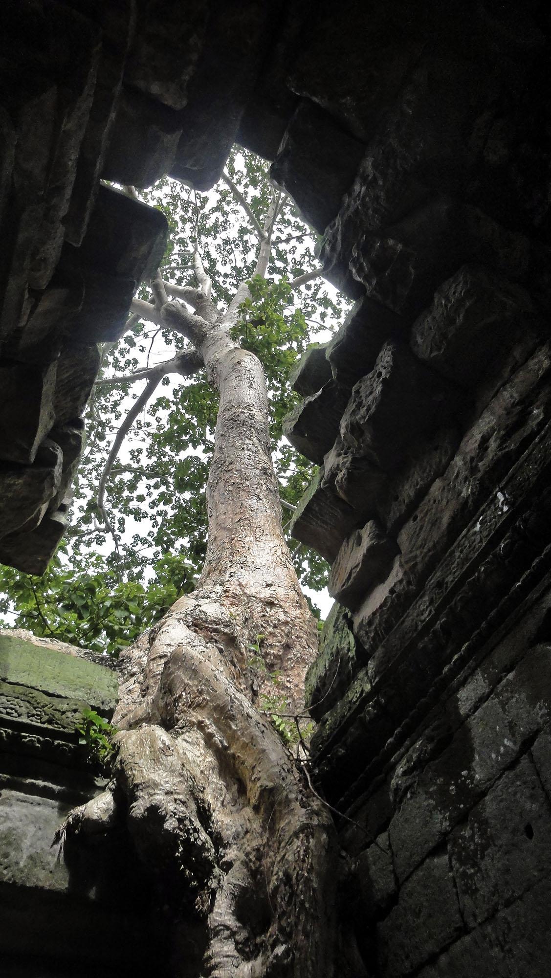 Cambodge-vert-3